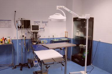 Cirurgia SOS Animal